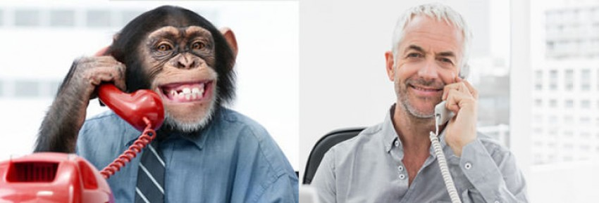 Chimp and man